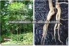 Natural Tongkat Ali Root Extract 100:1