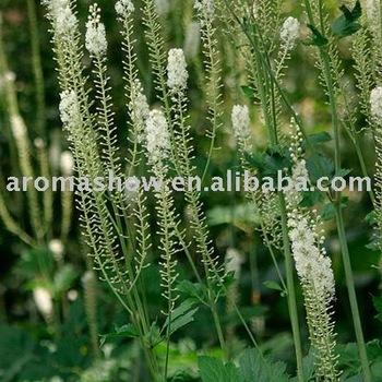 1kg Black Cohosh Extract 2.5% Triterpene (Latin name: Cimicifuga racemosa)