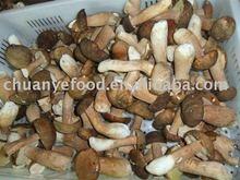 Frozen King Bolete Mushrooms
