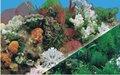 Plásticoimpermeável doublesizes aquário fundoimagem j01/j03