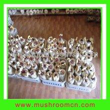 Medical mushroom
