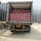 chinese garlic transported in 40RH container