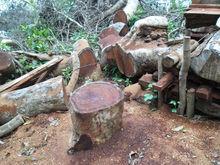 kwila/Merbau, PNG rosewood, PNG Walnut