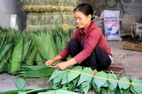 Fresh big size bamboo leaf