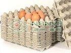 egg carton/egg tray/egg box