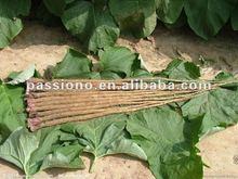 Herbal Extract Burdock Root Extract/ Burdock Root 10:1 in stock