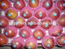 sweet fresh unbagged red qinguan apple 2014