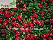 IQF Lingonberry Plants