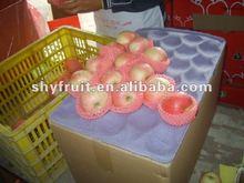 fresh apple exporters , fresh fruit