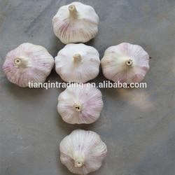 new crop fresh china garlic price