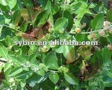 1.5%, 2.5%. 5% 8% Ashwagandha Root Extract