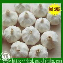 2014 chinese fresh garlic producers