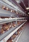 Breeding & Broiler Cage