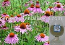 Echinacea Herb Extract (polyphenol)