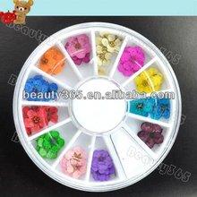 2012 New Fashion Hot 60 Dried Flower Acrylic Nail Art Wheel Decoration Designs