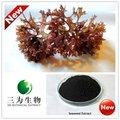 New Hot produto Natural verde extrato de algas marinhas da GMP fabricante