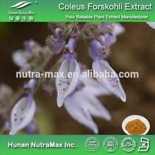 Coleus Forskohlii Extract 10:1, Coleus Forskohlii Root Extract,Coleus Forskohlii P.E.