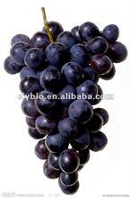 Grape seed p.e. proanthocyanidin 98%