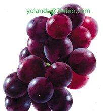 Grape Skin Extract 95% OPC
