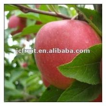 fresh fruits apples