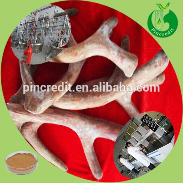 Chinese Deer Chinese Precious Deerhorn Deer