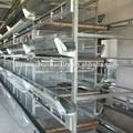 hangars ou batterie de volaille cages pour les poulets