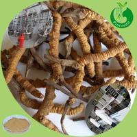 Cordyceps sinensis extract powder yarsagumba from nepal yarsagumba