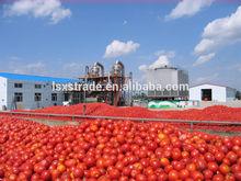 sauce tomato/ketchup cheap price sale (B)