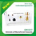 أنواع الحشرات المفيدة qf6/ متحف الزخرفة/ مستلزمات تربية جيدة