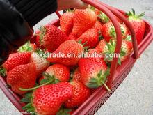 Top sale 2014 fresh frozen strawberry