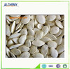 White snow pure pumpkin seeds in bulk , new in 2014 , good price