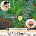 2015 novos produtos tribulus extrato de ervas estimulantes sexuais