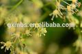 jujuba mel de abelha em pequeno frasco de vidro fábrica do oem
