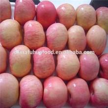 Sweet Yantai Fuji Apple