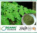 2014 la buena venta del bueno polvo de las hojas de moringa/ el polvo de moringa