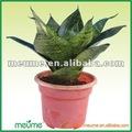 مغطى النباتات الاستوائية---- sansevieria trifasciata( الأفعى النباتية)