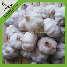 normal white garlic china garlic price 2014