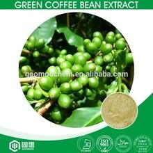 Kosher,Halal,ISO,GMP Pure Chlorogenic Acid Green Coffee Bean Extract