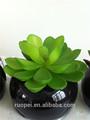 Ojo - captura artificial plantas suculentas para ornamento
