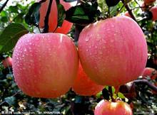 Chinese Fresh Red Juicy Fuji Apple