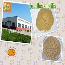 Nutrition enhancer-- Bacillus Subtilis