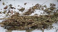 Hairyvein Agrimoia Herb/Xian He Cao/Agrimonia pilosa