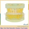 modelo a12 28 pcs duro goma removível padrão modelo de dentes