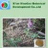High Quality Corydalis Yanhusuo Extract 80% Tetrahydropalmatine
