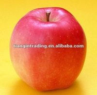 shandong fresh red star apple