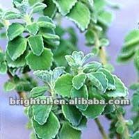 High Quality Coleus Forskohlii Extract 20%~98% Forskohlin
