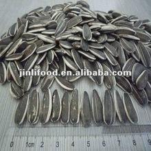 sunflower seeds 5009#,new crop,sale season