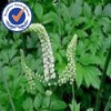 Natural Black Cohosh P.E.
