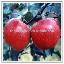 2012 sweet cheap crop factory let out crisp apple products wholesale