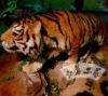 /product-gs/vivid-animated-animatronic-animal-tiger-king-650351144.html